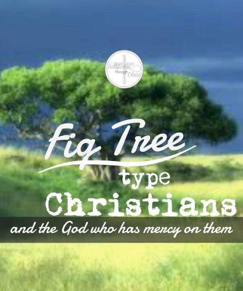 fig tree final
